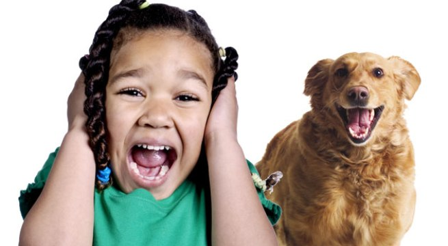 Superar miedo a perros