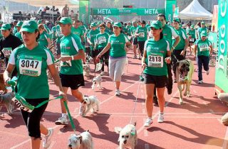 Carrera solidaria de animales