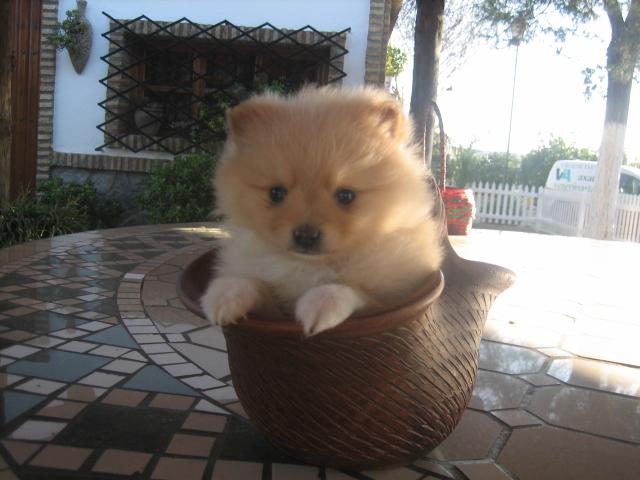 Criadero regala perros