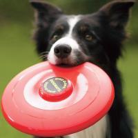 deporte para practicar con tu perro