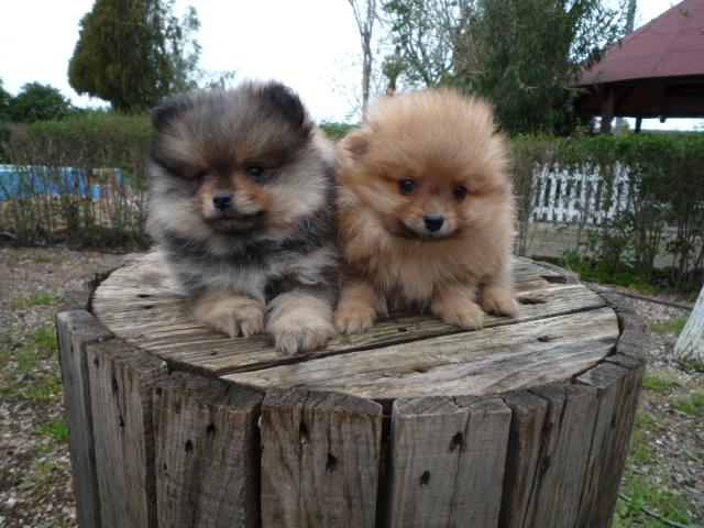 Fotos De Hermosos Perros Cachorros De Diferentes Razas De Criadero ...
