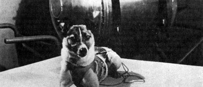 Perros famosos Laika