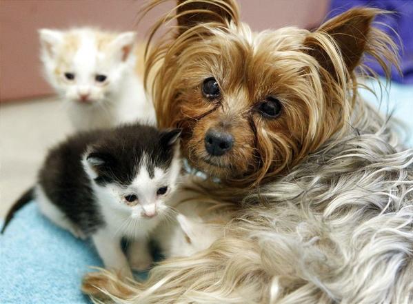 Perros vs. Gatos