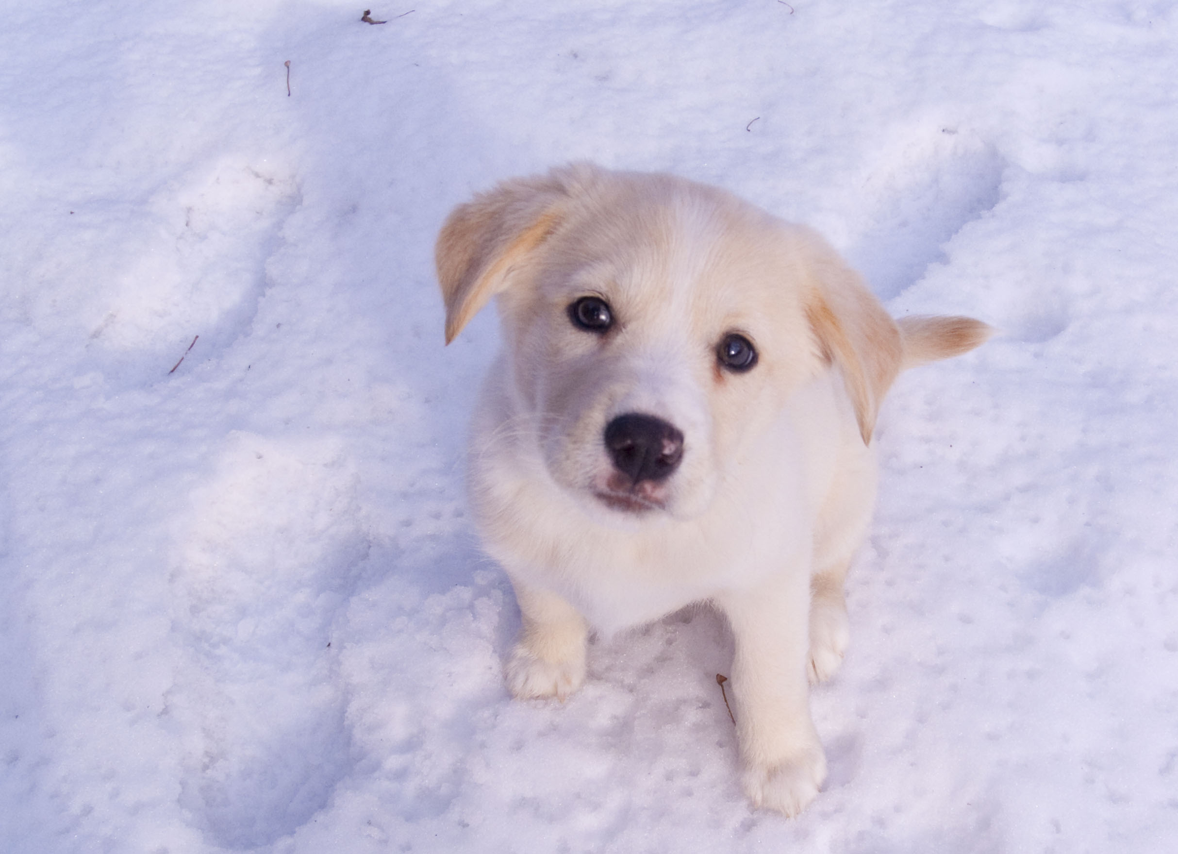 Cachorro en la nieve