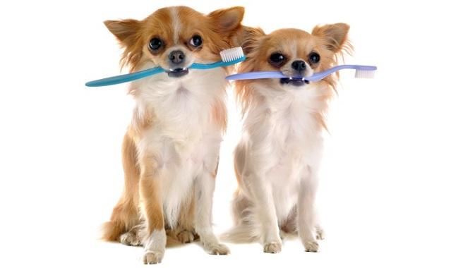 Higiene dental perros. // Foto: www.animalmascota.com
