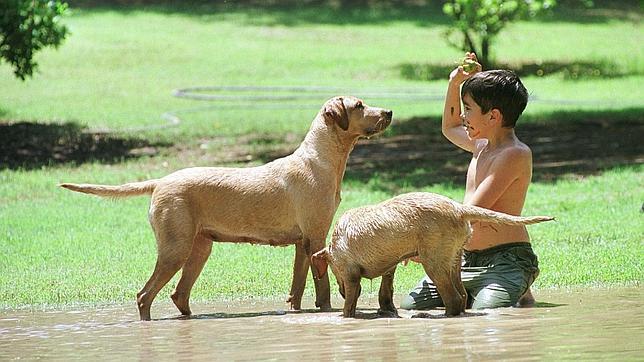 Perros y bebés. // Foto: J. L. ORTEGA para ABC