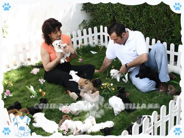 Criadero de Perros Toy y miniatura Cantillana