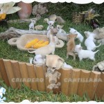 venta de perros chihuahua