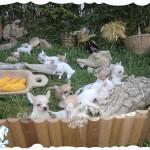 criadores de chihuahua en España